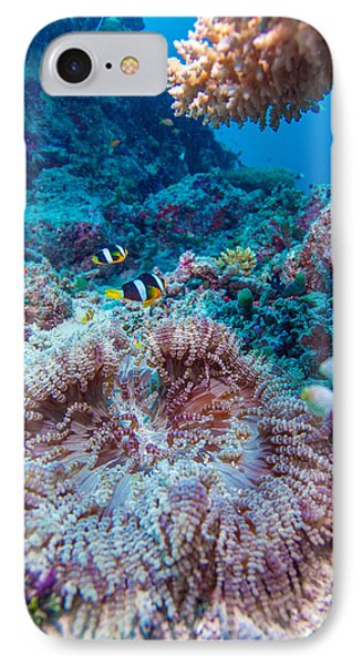 Yellowtail Clown Fish With Sea Anemone IPhone Case by Rostislav Ageev