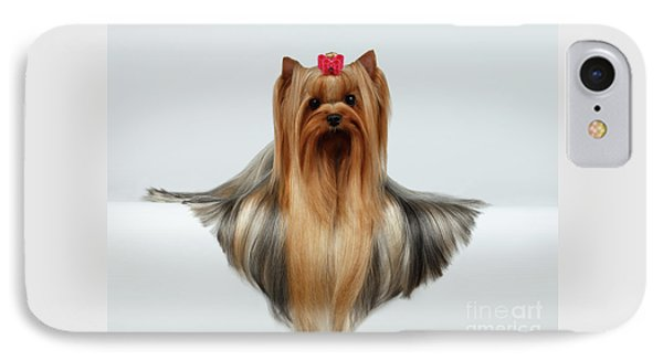Yorkshire Terrier Dog With Long Groomed Hair Lying On White  IPhone 7 Case by Sergey Taran