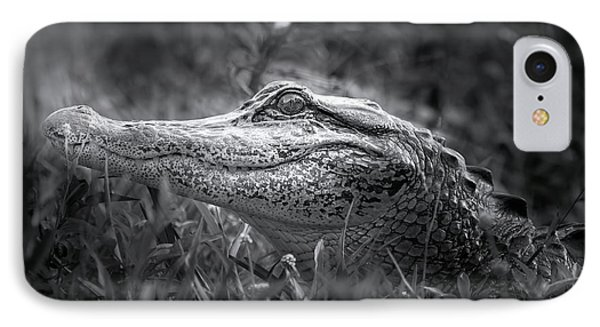 Young Alligator At Sunrise IPhone Case
