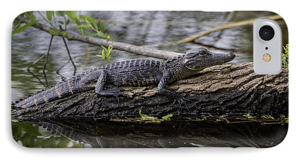 Young Alligator IPhone Case by Brian Jannsen