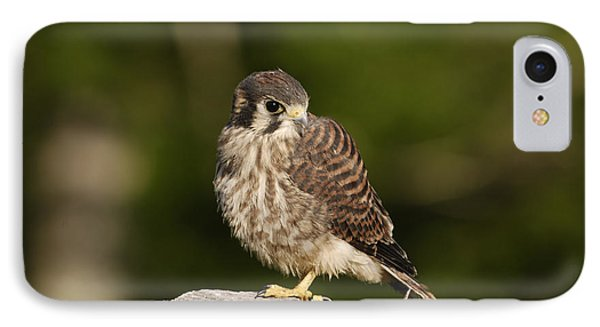 Young American Kestrel Phone Case by Randy Bodkins