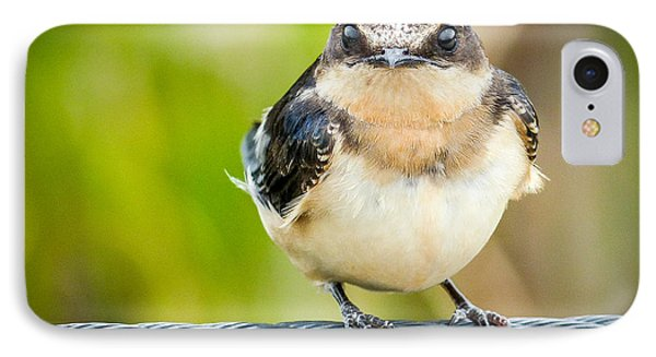 Young Barn Swallow IPhone Case by Richard Chasin