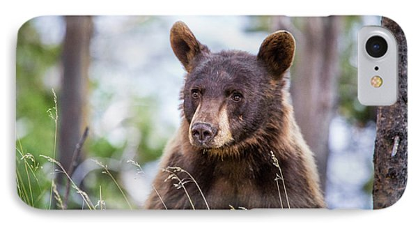 Young Black Bear Phone Case by Dan Pearce