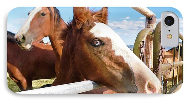IPhone Case featuring the photograph Young Blue Eyed Horse by Deborah Moen