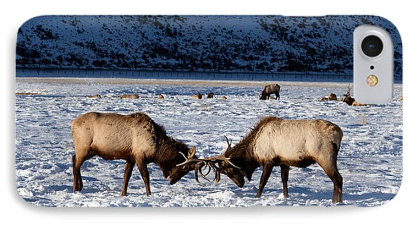 IPhone Case featuring the photograph Young Bull Elk In Jackson  Hole In Wyoming by Carol M Highsmith