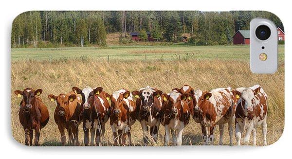 Young Calves On Pasture IPhone Case by Veikko Suikkanen