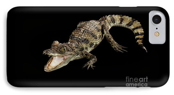 Young Cayman Crocodile, Reptile With Opened Mouth And Waved Tail Isolated On Black Background In Top IPhone Case by Sergey Taran