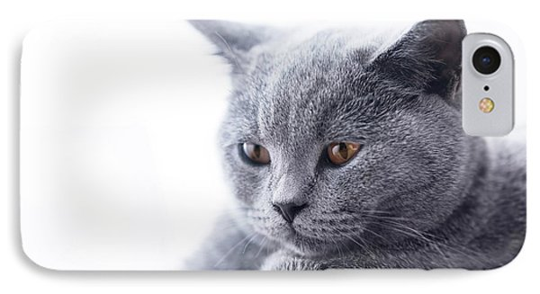 Young Cute Cat Close-up Portrait IPhone Case