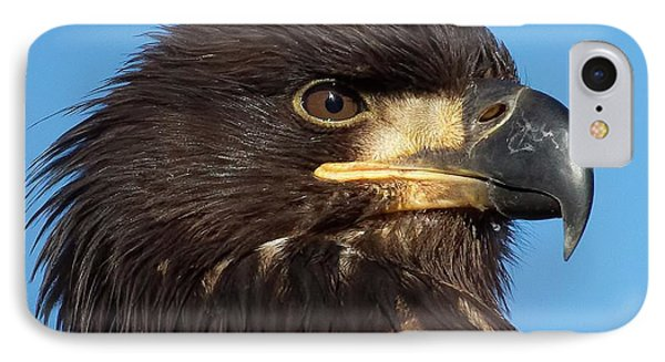 Young Eagle Head IPhone Case by Sheldon Bilsker