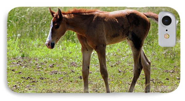 Young Foal Phone Case by Marty Koch