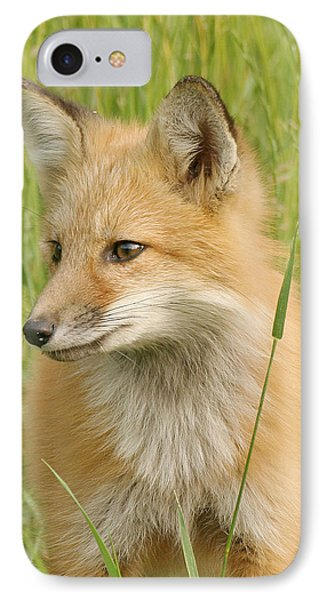 IPhone Case featuring the photograph Young Fox by Doris Potter