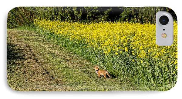 Young Fox In A Rapeseed Field IPhone Case by Panoramic Images