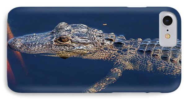 IPhone Case featuring the photograph Young Gator 1 by Arthur Dodd