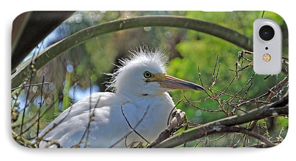 Young Great Egret Phone Case by Kenneth Albin