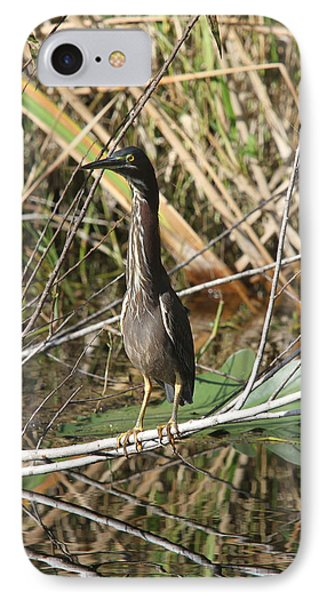 Young Green Heron  IPhone Case by Christiane Schulze Art And Photography