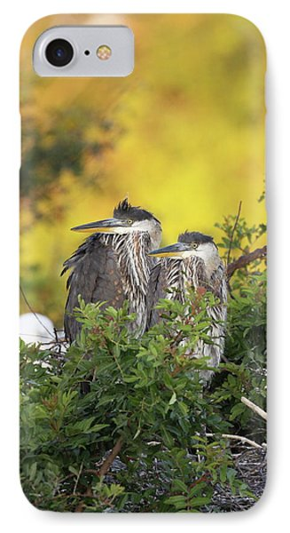 Young Herons IPhone Case by Brian Magnier