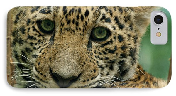 Young Jaguar IPhone Case by Sandy Keeton