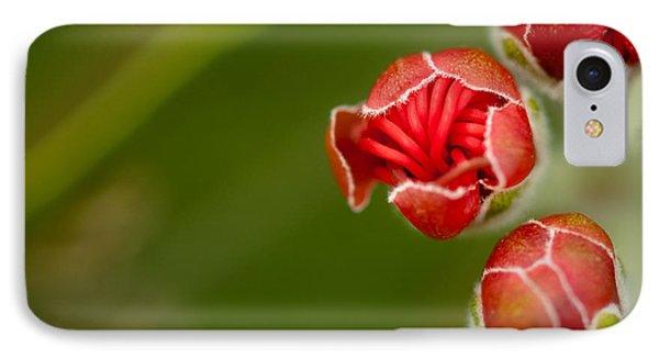Young Ohia Lehua Blossom Phone Case by Kenton Wandasan