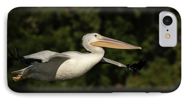 Young Pelican 2016-2 IPhone Case