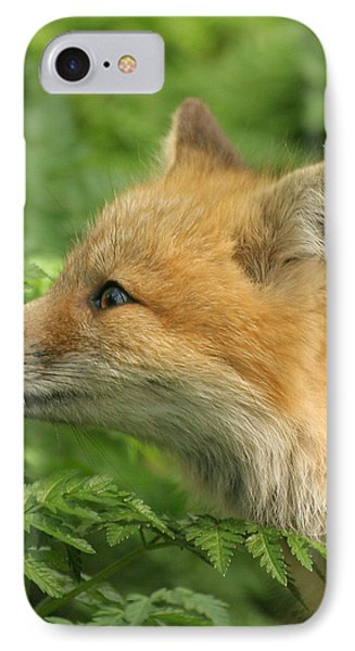 IPhone Case featuring the photograph Young Red Fox In Profile by Doris Potter