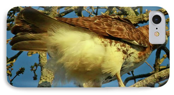 Young Red-tail Phone Case by Phill Doherty