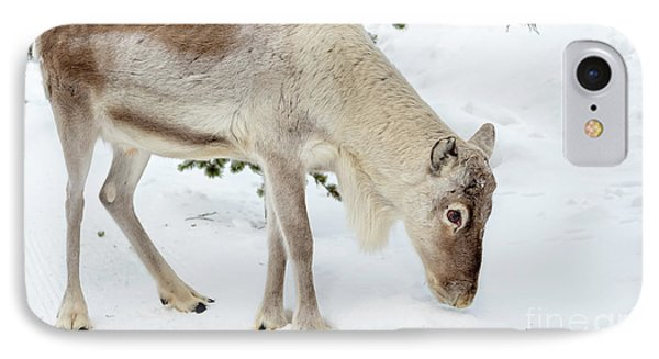 IPhone Case featuring the photograph Young Rudolf by Delphimages Photo Creations