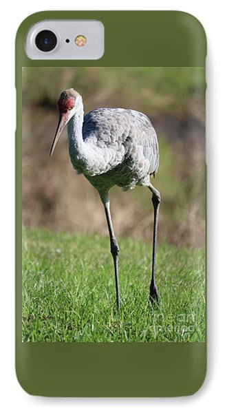 Young Sandhill IPhone Case by Carol Groenen