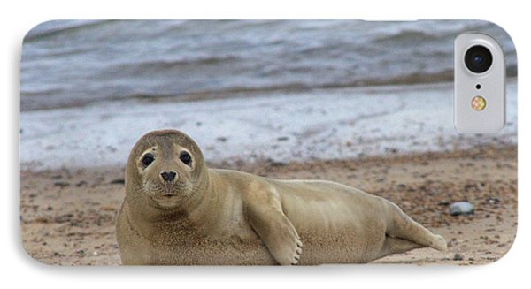 Young Seal Pup On Beach - Horsey, Norfolk, Uk Phone Case by Gordon Auld