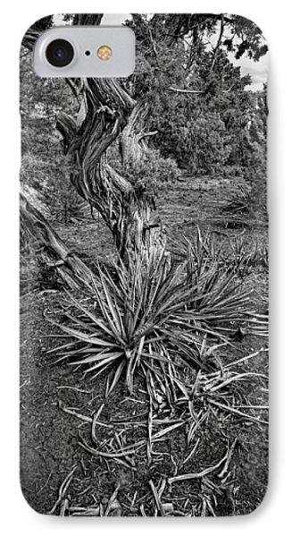 Yucca In Juniper Forest IPhone Case