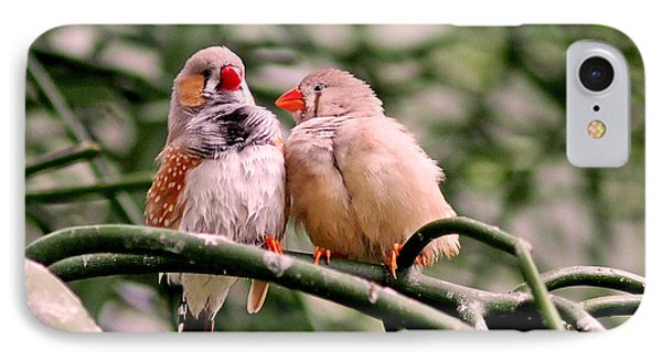 Zebra Finch Colloquy IPhone Case by Rona Black
