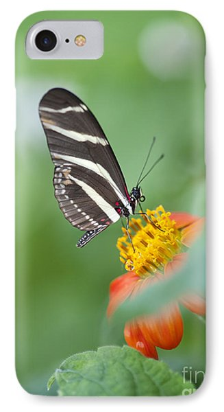 Zebra Longwing Butterfly IPhone Case by Tim Gainey