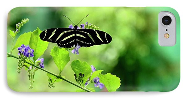 IPhone Case featuring the photograph Zebra Longwing Butterfly by Corinne Rhode