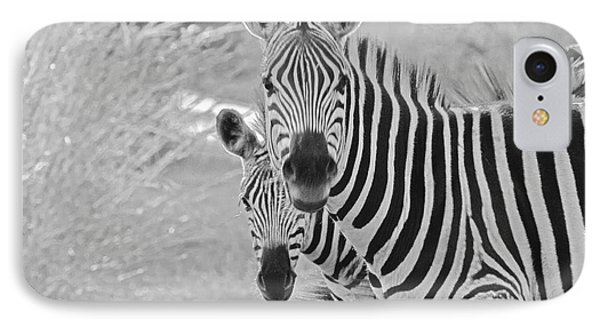 Zebras IPhone Case by Patrick Kain