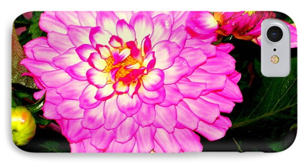 IPhone Case featuring the photograph Zennia by Greg Moores