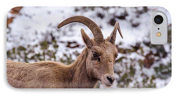 Zion Bighorn Sheep Close-up IPhone Case