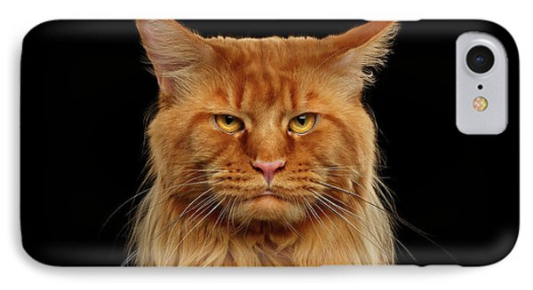 Cat iPhone 7 Case - Angry Ginger Maine Coon Cat Gazing On Black Background by Sergey Taran