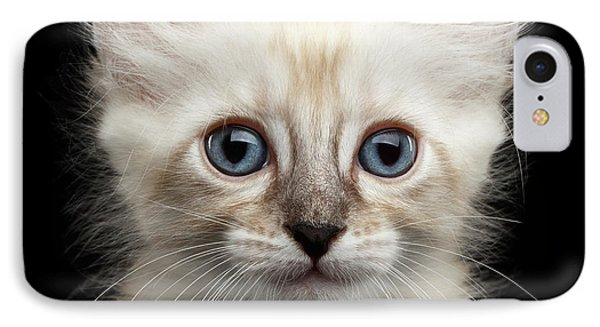 Cat iPhone 7 Case - Mekong Bobtail Kitty With Blue Eyes On Isolated Black Background by Sergey Taran