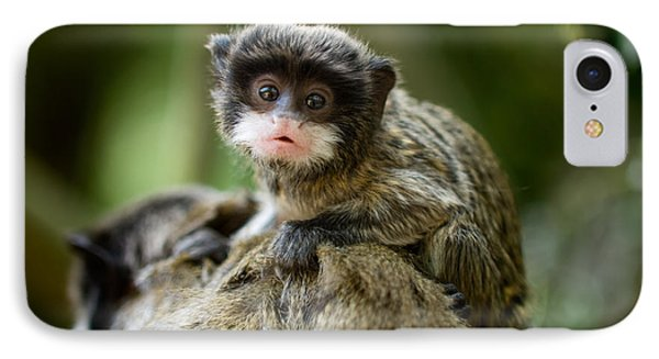 South America iPhone 7 Case - Cute Baby Emperor Tamarin Saguinus by Eric Gevaert