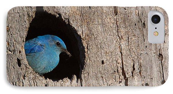 Rocky Mountain iPhone 7 Case - Mountain Bluebird, Sialia Currucoides by Tom Reichner