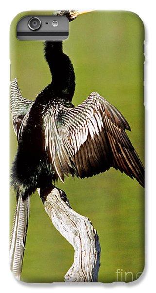 Anhinga Anhinga Anhinga Drying Plumage IPhone 7 Plus Case
