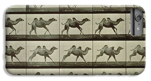 Camel IPhone 7 Plus Case by Eadweard Muybridge