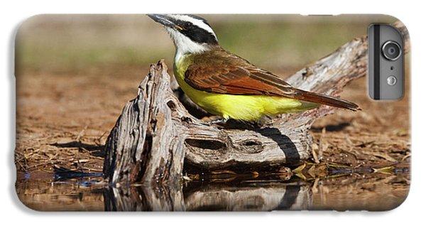 Flycatcher iPhone 7 Plus Case - Great Kiskadee (pitangus Sulphuratus by Larry Ditto