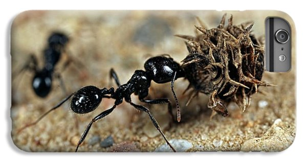 Ant iPhone 7 Plus Case - Harvester Ant by Frank Fox