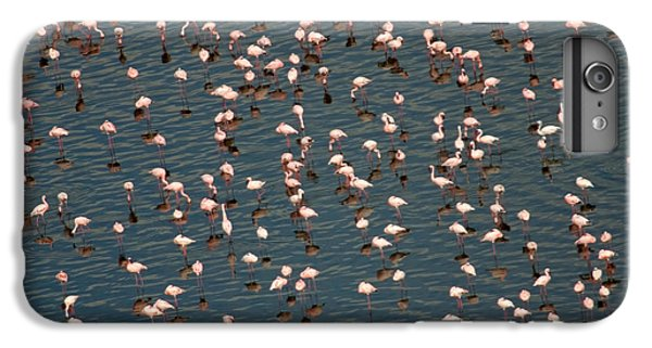 Lesser Flamingo, Lake Nakuru, Kenya IPhone 7 Plus Case