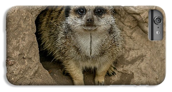 Meerkat IPhone 7 Plus Case by Ernie Echols