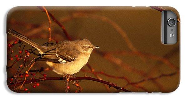 Northern Mockingbird Mimus Polyglottos IPhone 7 Plus Case by Paul J. Fusco