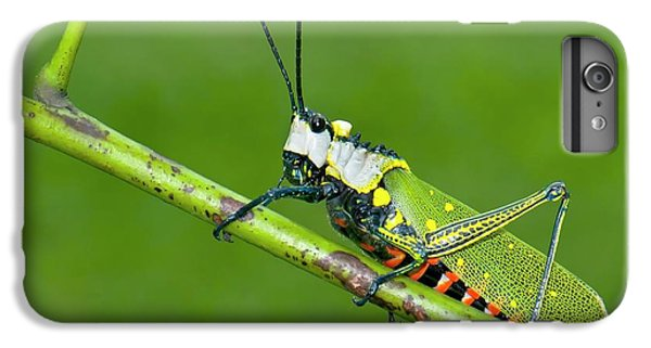 Grasshopper iPhone 7 Plus Case - Northern Spotted Grasshopper by K Jayaram