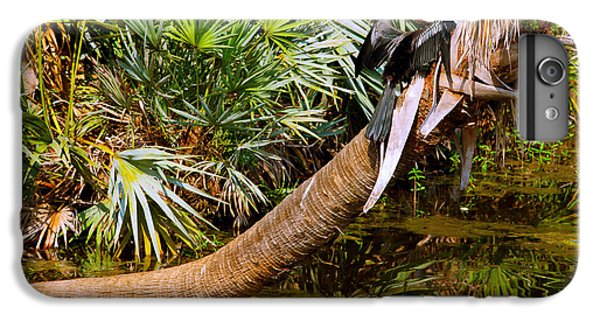 Oriental Darter Anhinga Melanogaster IPhone 7 Plus Case