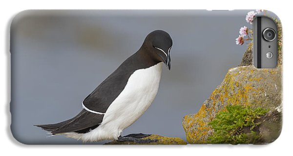 Razorbill IPhone 7 Plus Case by John Shaw