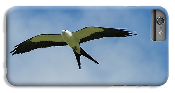 Swallow iPhone 7 Plus Case - Swallow-tailed Kite In Flight by Maresa Pryor